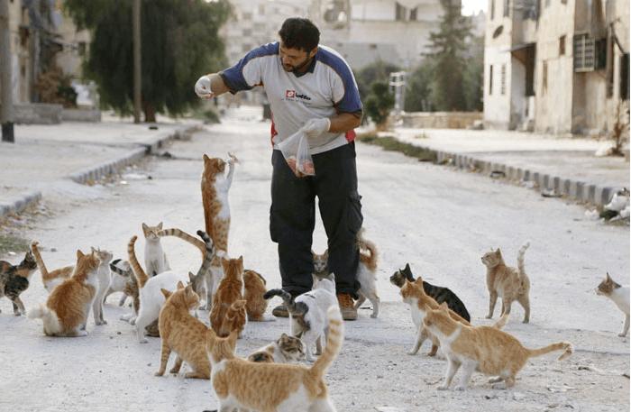 Cat man of Aleppo:
