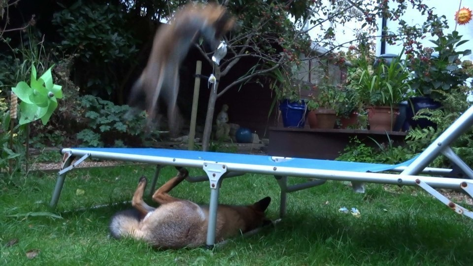 She caught the two animals having a blast on the patio chair and using it as a trampoline.