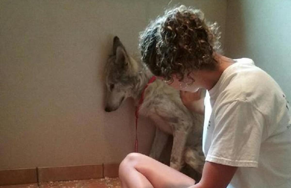 Image: Facebook/WOLF Sanctuary