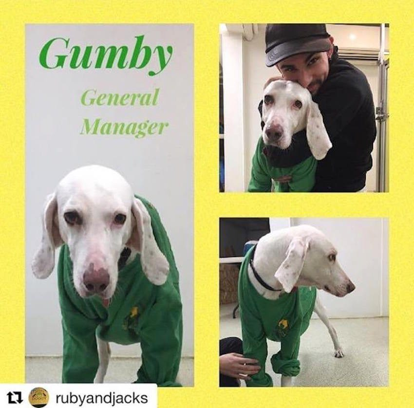 Image result for gumby stray dog run away