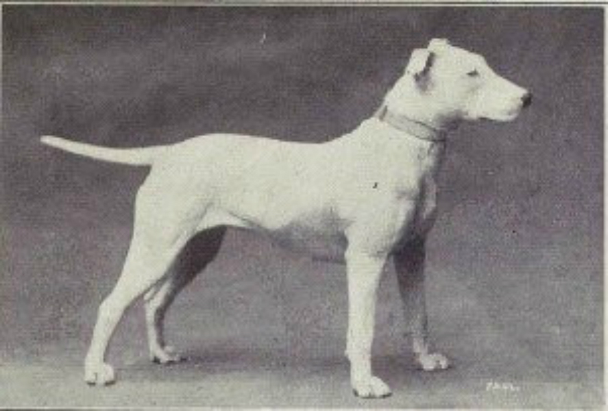 Bull Terriers Then