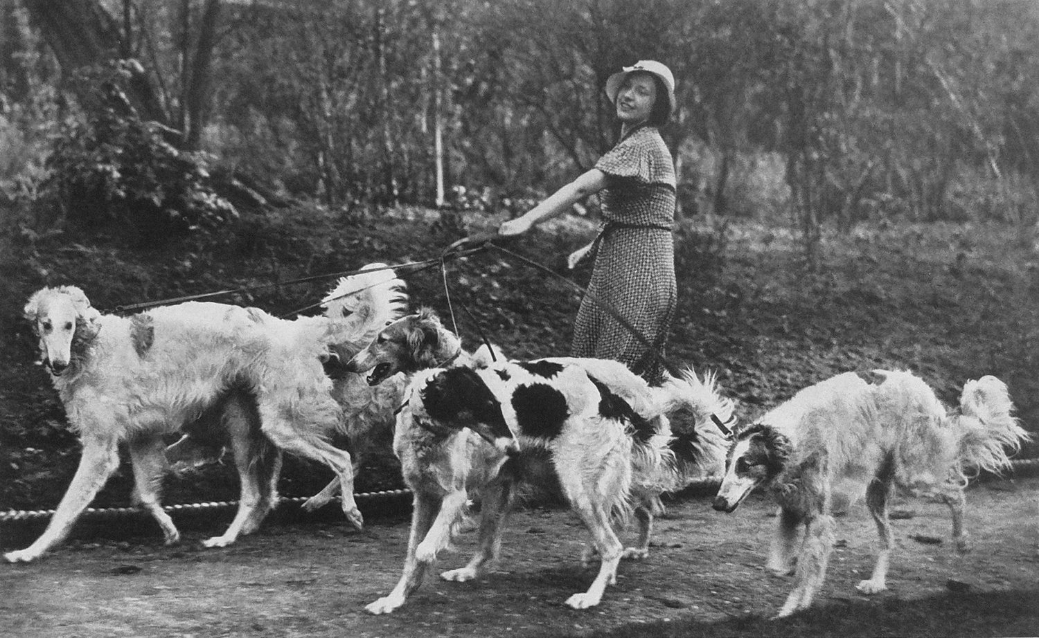 Image result for borzoi old picture