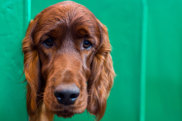 Crufts Dog Show 2016 - Day Two