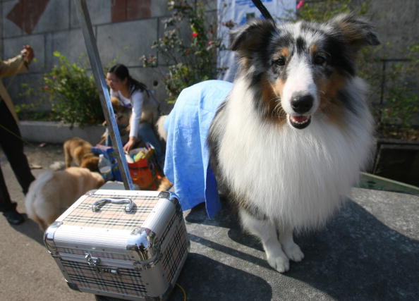 2007 China All-Breed Dog Show And Training Contest Held In Nanjing