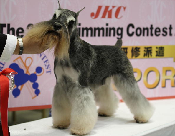 Asian International Dog Show
