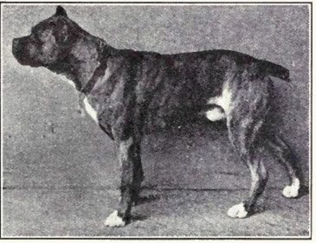 Image result for dogs used to look like