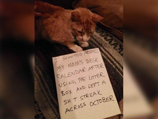 A Cat-Tastrophic Calendar