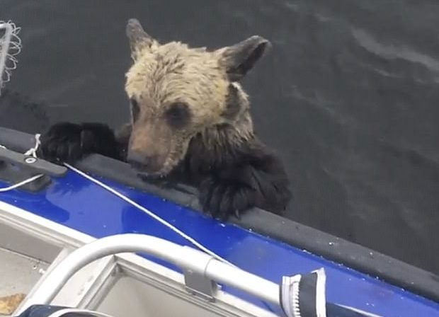 Image result for boat saves drowning bears