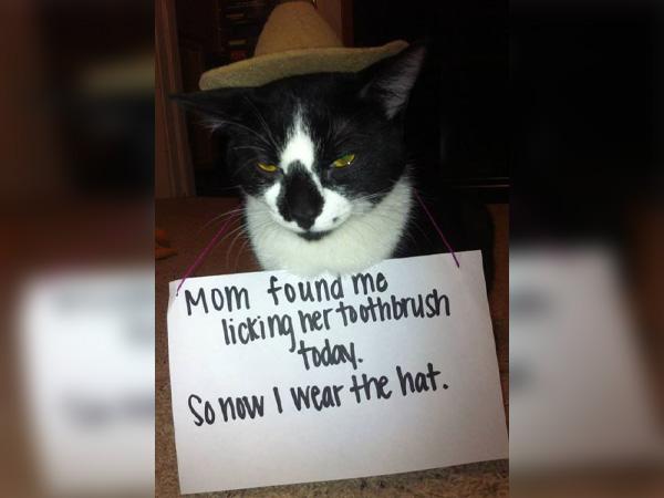 The Hat Of Shame