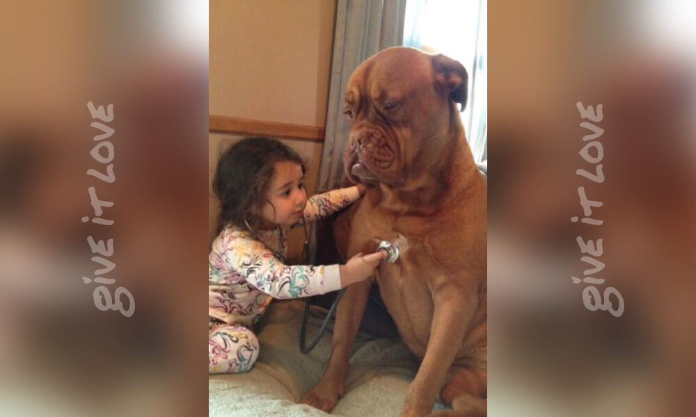 litle-kid-big-dog-6.jpg
