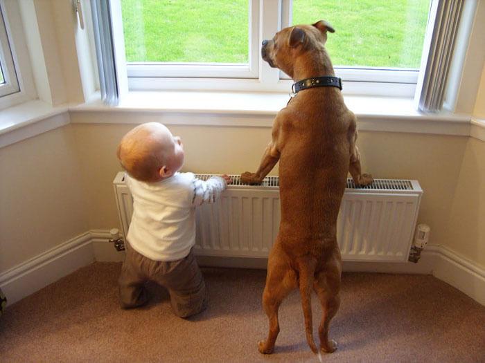 tiny-baby-big-dog-22.jpg
