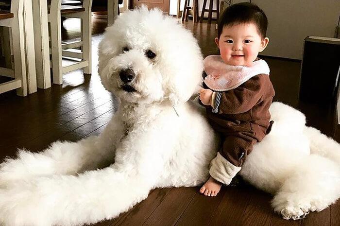 tiny-baby-big-dog-23.jpg
