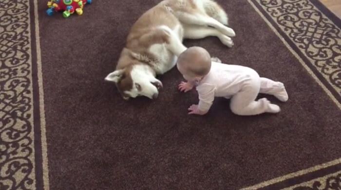 tiny-baby-big-dog-24.jpg