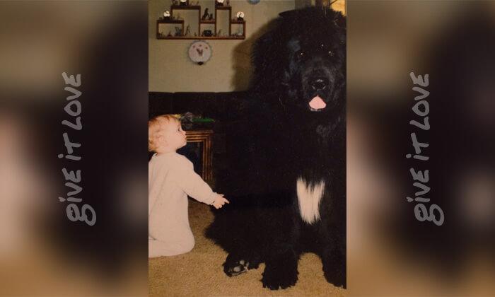tiny-baby-big-dog-26.jpg