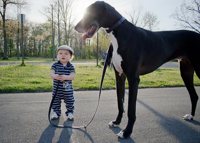 tiny-baby-big-dog-27.jpg