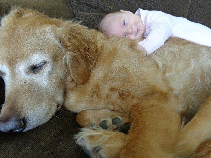 tiny-baby-big-dog-30.jpg