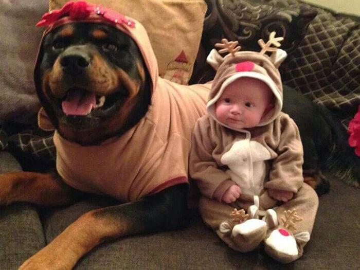 tiny-baby-big-dog-34.jpg