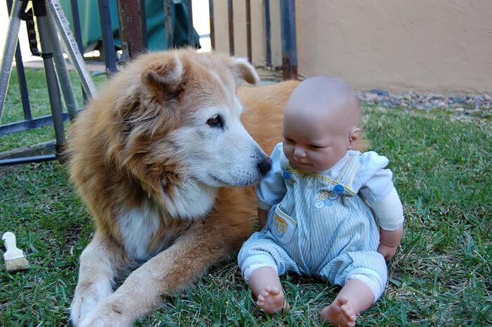 tiny-baby-big-dog-39.jpg