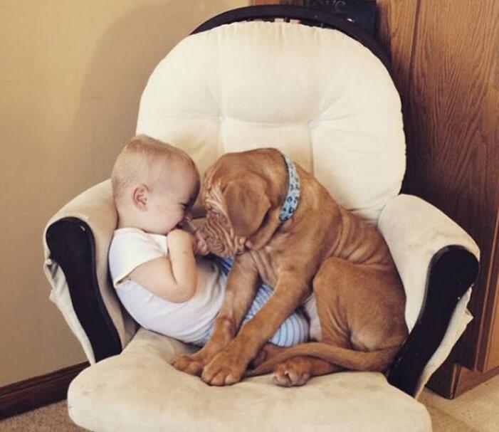 tiny-baby-big-dog-40.jpg
