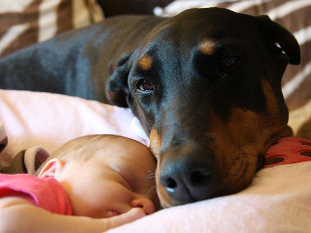 Cute photo of a doberman cuddling a baby