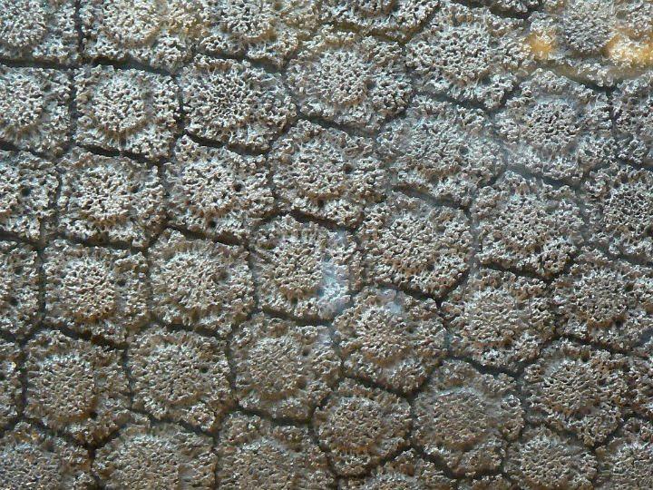 Argentina farmer's glyptodont shell