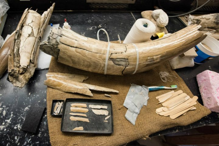 Michigan farmer mammoth mysterious discovery