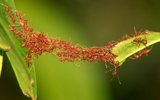 Image result for ants colony