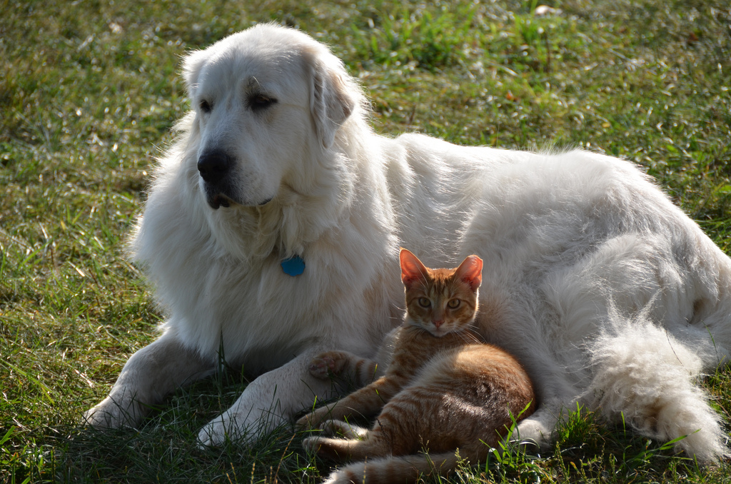 Image result for dog and tiny cat friendship sun