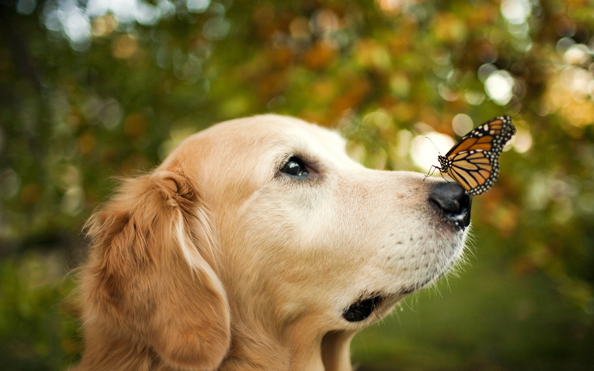 Image result for dog and butterfly friendship