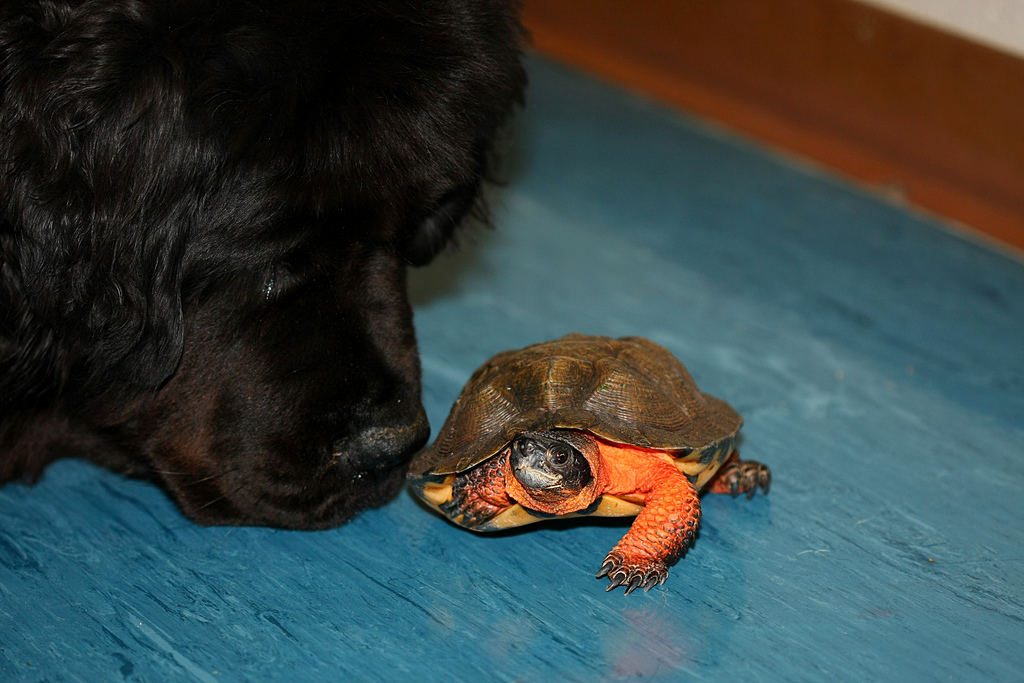 Image result for dog and tiny tortoise friendship