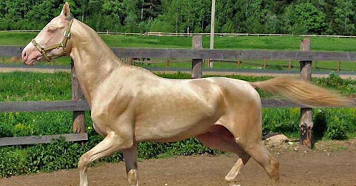 Image result for horse golden