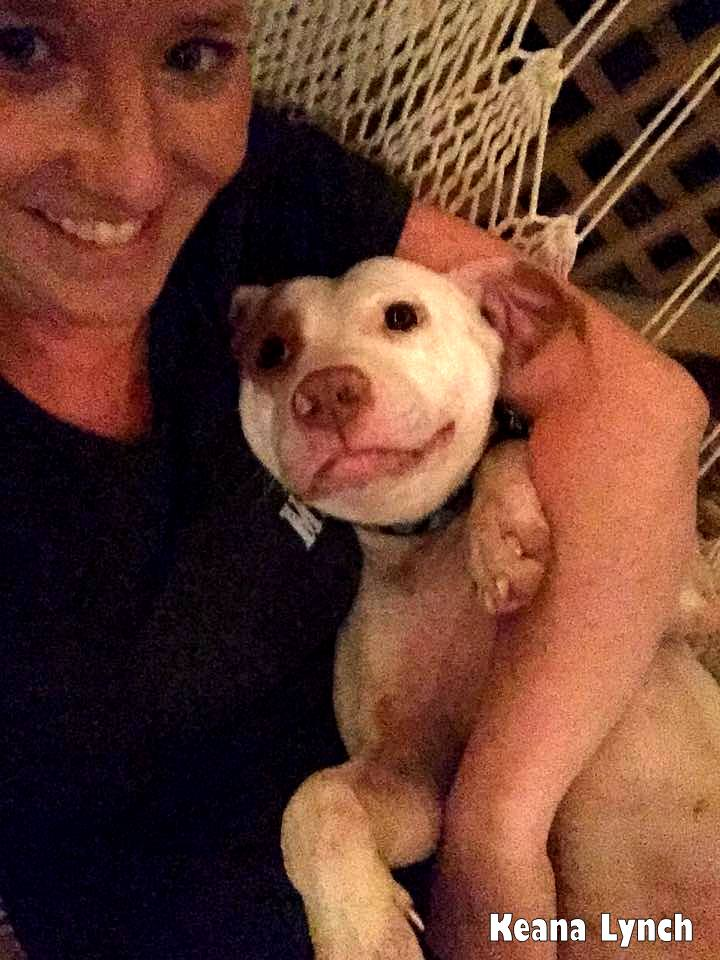 Image result for lilo the pit bull vultures