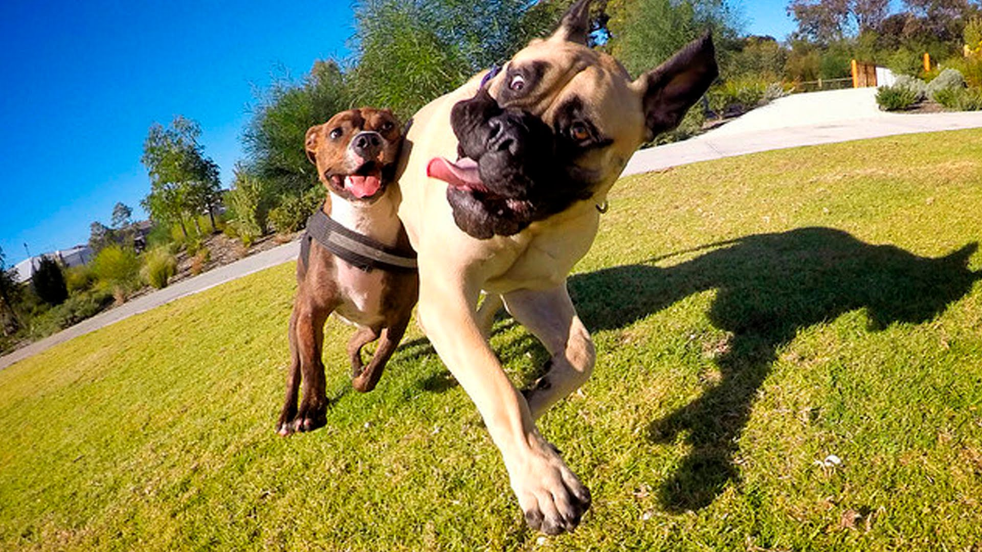 Image result for dogs play