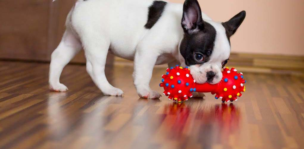Image result for dogs toys