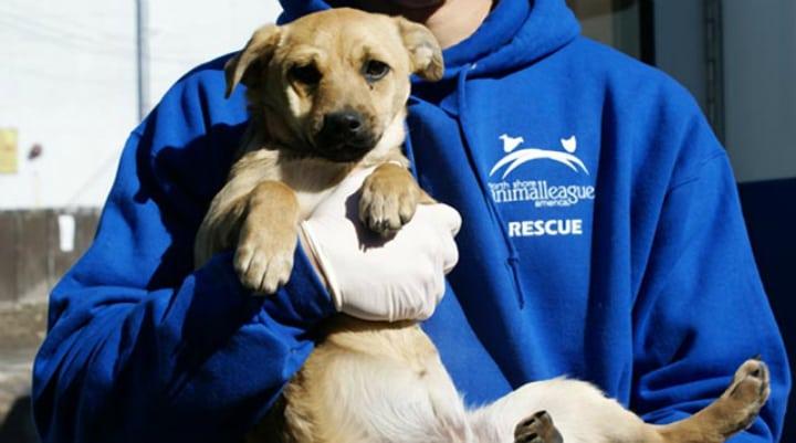 tornado rescue dog