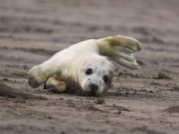 Image result for otters seals baby