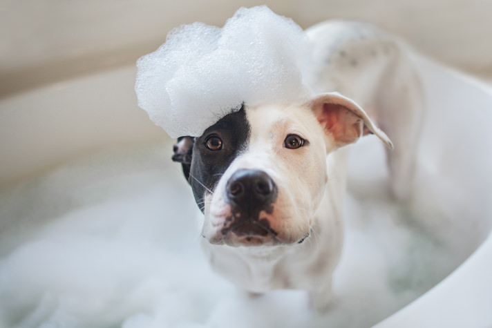 Image result for dogs bath