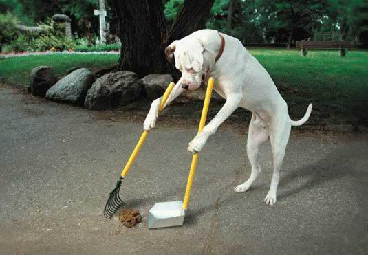 Image result for dogs chores