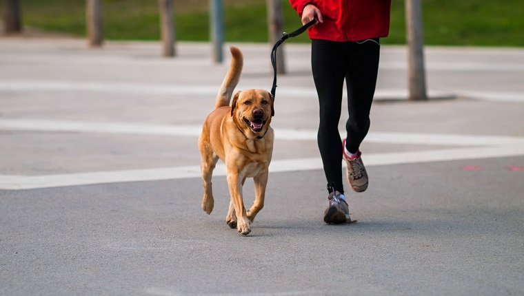 Image result for dog running owner