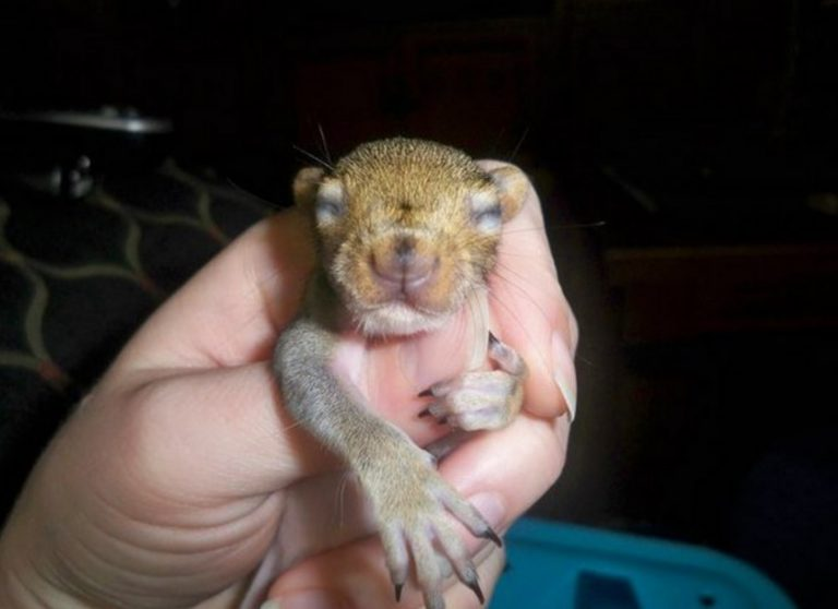 Macintosh HD:Users:brittanyloeffler:Downloads:Baby Squirrel:1-squirrel-comes-back-768x558.jpg