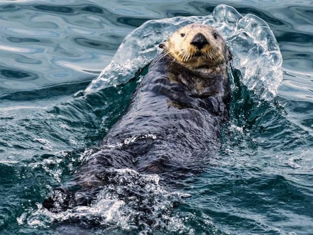 candid otter shot