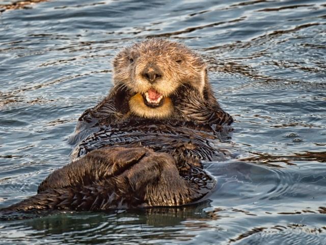 friendly sea otters