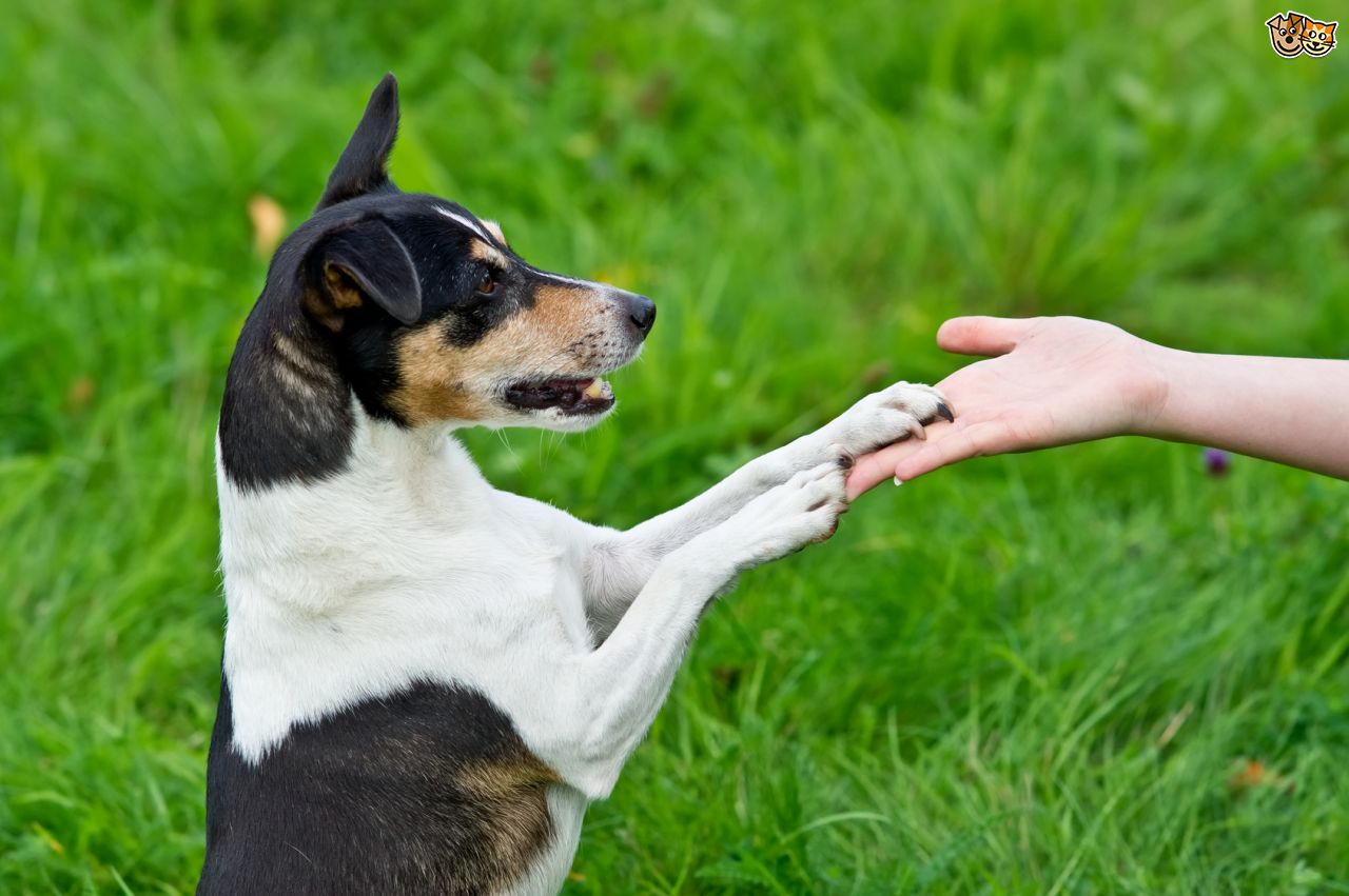 Image result for dogs obedient