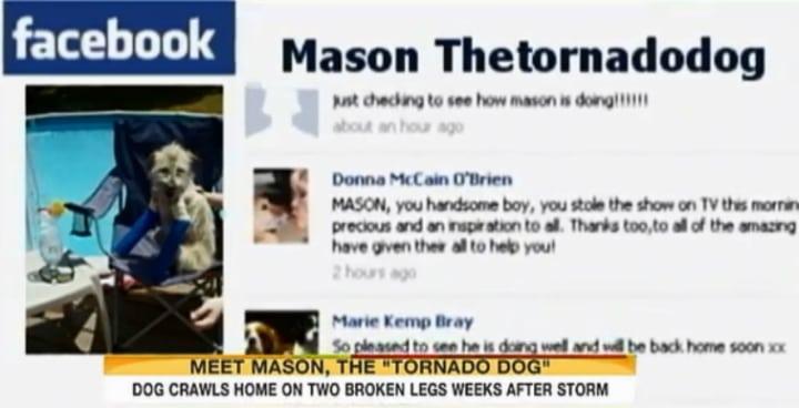 Mason the Tornado Dog