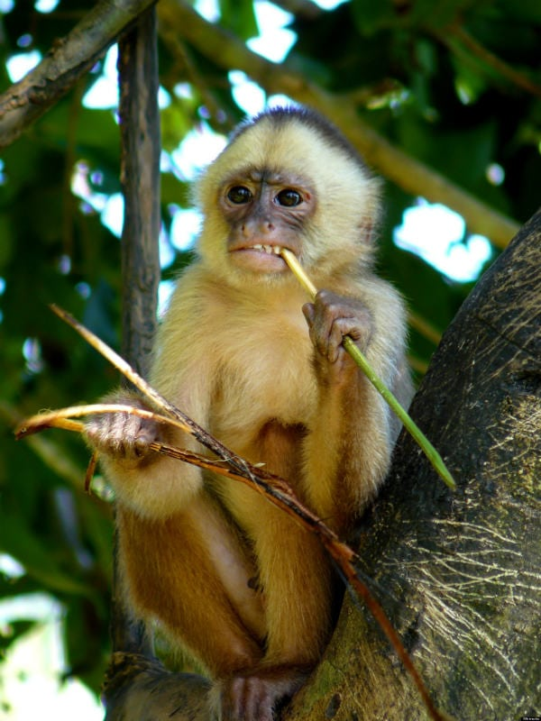 marina - raised by monkeys
