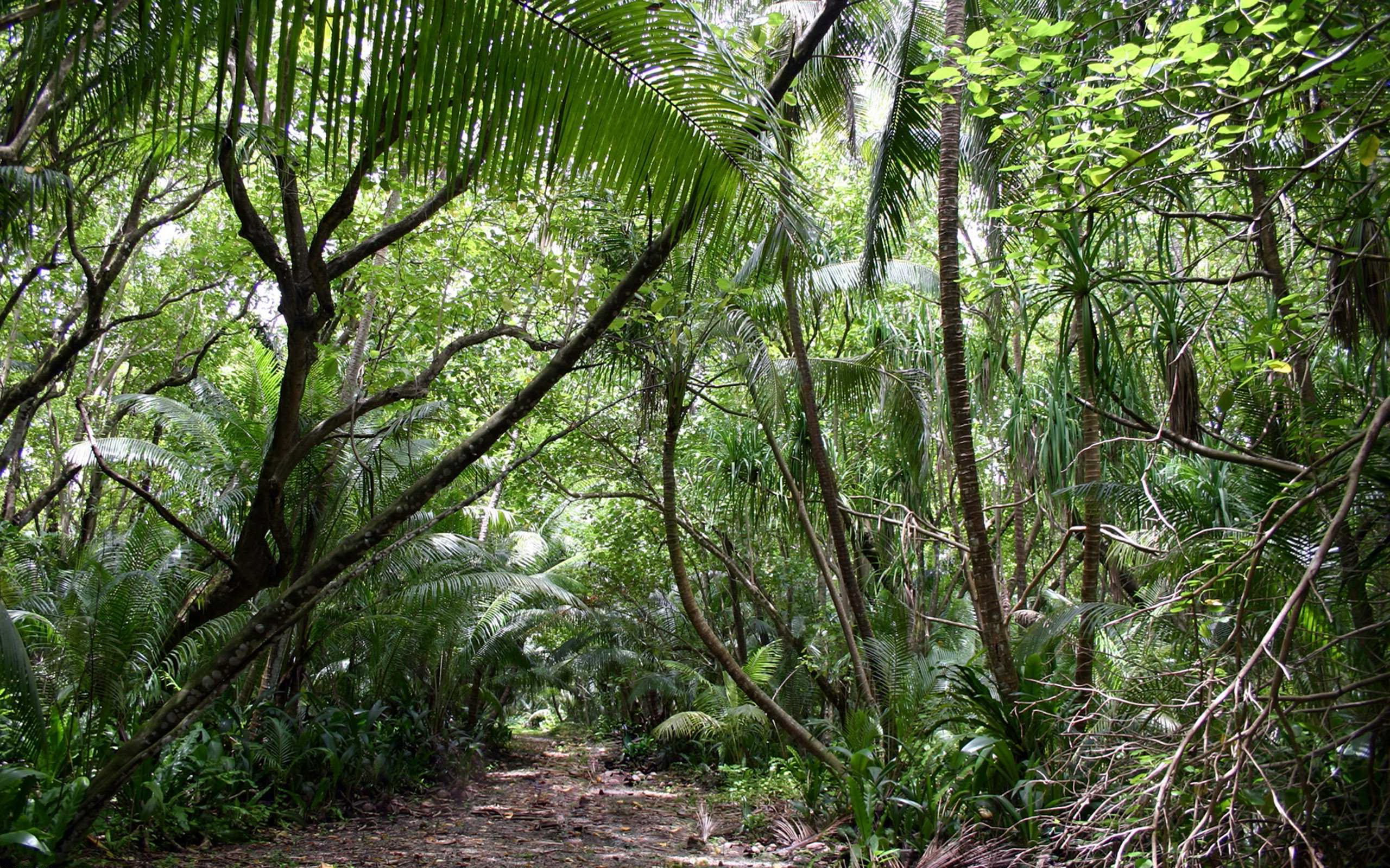 Image result for jungle